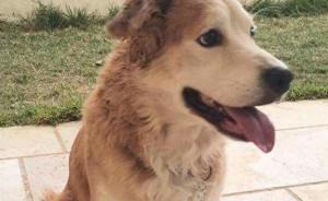 Mailo was found on a street in Kfat Tavor. Photo: Facebook.
